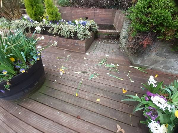 Damage to floral planters in the Dingle