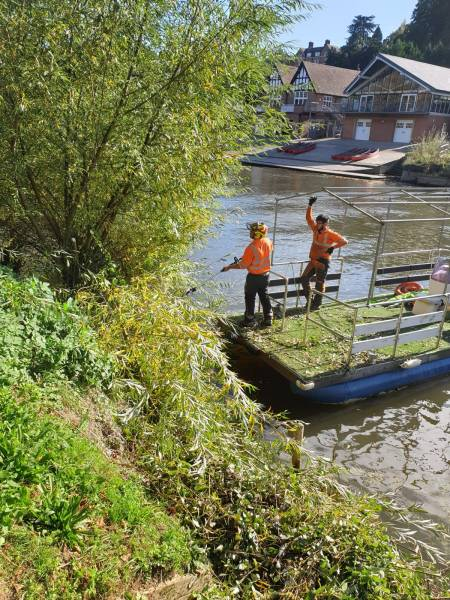Shrewsbury Town Fisheries Tree Thinning